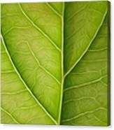 Tree Leaf Canvas Print