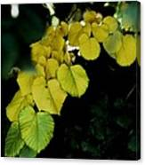 Tree Leaves In Yellow Green Canvas Print