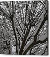 Tree Limb 4 Canvas Print