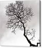 Tree Limb Canvas Print