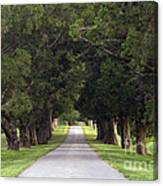 Tree Lined Drive - D008564 Canvas Print