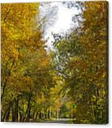 Tree Lined Park On A Fall Day Canvas Print