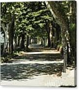 Tree Lined Promenade Canvas Print