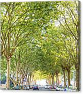 Tree-lined Street Canvas Print