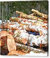 Tree Logs  Canvas Print