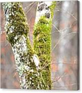 Tree Moss Abstract Canvas Print