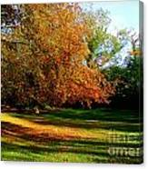 Tree Of Gold Canvas Print