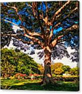 Tree Of Joy. Mauritius Canvas Print