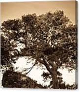 Tree Of Life In Sepia Canvas Print
