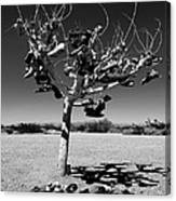 Tree Of Lost Soles 2 Canvas Print