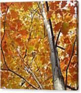 Tree Of Orange Canvas Print