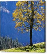 Tree Of Seasons Canvas Print
