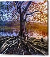 Tree Of Souls Canvas Print