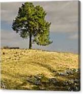 Tree On A Hill Vertical Canvas Print