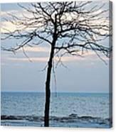 Tree On Beach Canvas Print