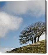 Tree On Hillside Canvas Print