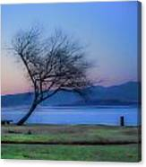 Tree On The Banks Of The River Clyde Canvas Print