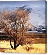Tree On The Farm Canvas Print