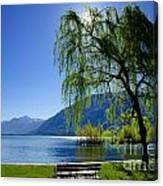 Tree On The Lakefront Canvas Print