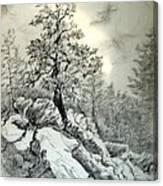 Tree On The Rocks Canvas Print