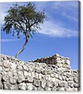 Tree On The Wall Canvas Print
