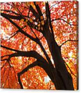 Tree Orange Blast Canvas Print