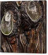 Tree Owl Canvas Print