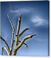 Tree Pointer Canvas Print