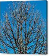 Tree Profile Canvas Print