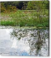 Tree Reflecting In Pond Canvas Print