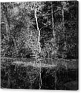 Tree Reflection In Chesapeake And Ohio Canal Canvas Print