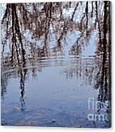 Tree Reflections I Canvas Print