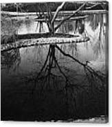 Tree Reflections On The Pond Canvas Print