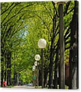 Tree Ride Canvas Print