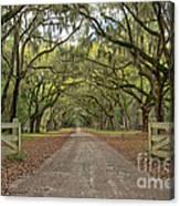 Tree Road Canvas Print