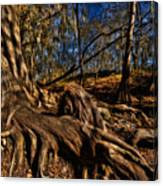 Tree Root Canvas Print