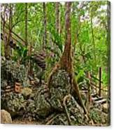 Tree Roots On Rock Canvas Print