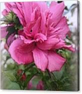 Tree Rose Of Sharon Canvas Print