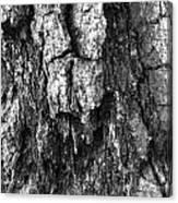Tree Rot Canvas Print