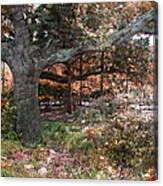 Tree Series 46 Canvas Print