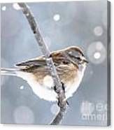 Tree Sparrow In The Snow Canvas Print
