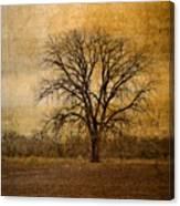 Tree Spirit Canvas Print