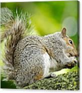 Tree Squirrel Canvas Print