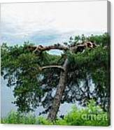 Tree Struck By Lightning Canvas Print