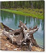 Tree Stump In Des Chutes Nf-or Canvas Print