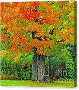Tree Swing Canvas Print