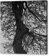 Tree Tangle Canvas Print