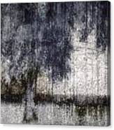 Tree Through Sheer Curtains Canvas Print