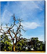 Tree Timestack Canvas Print