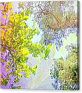 when the tree tops are looking down at me I am feeling little but also very lucky  Canvas Print